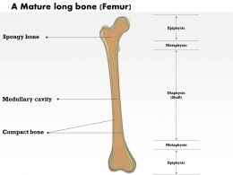 0514 A Mature Long Bone Medical Images For Powerpoint