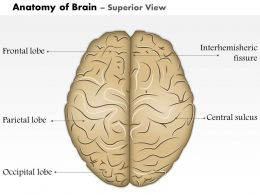 0514_anatomy_of_brain_superior_view_medical_images_for_powerpoint_Slide01