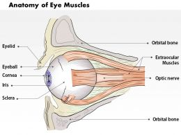 0514 Anatomy Of Eye Muscles Medical Images For PowerPoint