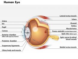 0514 Anatomy Of Human Eye Medical Images For PowerPoint