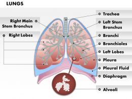 0514_anatomy_of_human_lungs_medical_images_for_powerpoint_Slide01