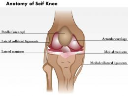 0514 Anatomy of Seif Knee Medical Images For PowerPoint