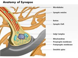 0514 Anatomy of Synapse nervous System Medical Images For PowerPoint