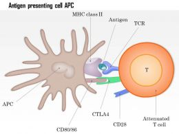 0514 Antigen presenting cell APC Medical Images For PowerPoint