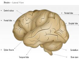 0514 Brain Lateral View Medical Images For Powerpoint