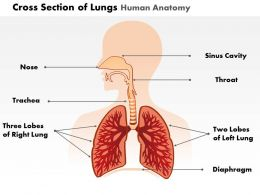 0514 Cross Section Of Lungs Human Anatomy Medical Images For PowerPoint