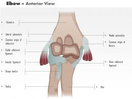 0514 Elbow anterior view Medical Images For PowerPoint