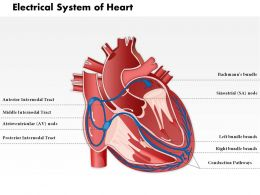 0514 Electrical System Of Heart Medical Images For PowerPoint