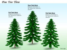 0514 Farms Of Pine Trees Image Graphics For Powerpoint