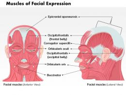 0514 Front And Side Views Of The Muscles Of Facial Expressions Medical Images For Powerpoint