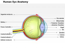 0514 Human Eye Anatomy Medical Images For PowerPoint