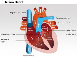 0514 Human Heart Medical Images For PowerPoint 2