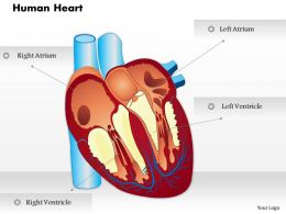 0514 Human Heart Medical Images For PowerPoint