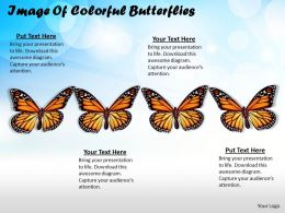 0514 Image Of Colorful Butterflies Image Graphics for PowerPoint