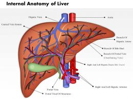 0514 Internal Anatomy Of Liver Medical Images For PowerPoint