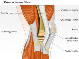 0514 Knee Lateral View Medical Images For Powerpoint