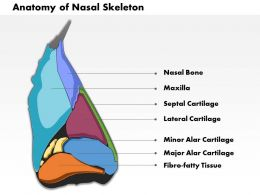 0514 Lateral View of External Nose Anatomy of Nasal Skeleton medical images for powerpoint