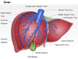 0514 Liver Medical Images For PowerPoint