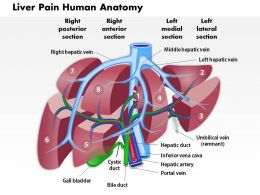 0514 Liver Pain Human Anatomy Medical Images For PowerPoint