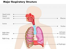 0514 Major Respiratory Structure Medical Images For PowerPoint