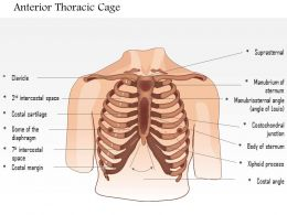 0514 Male chest wall anterior View Medical Images For PowerPoint