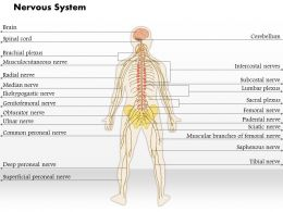 0514 Nervous System Medical Images For PowerPoint