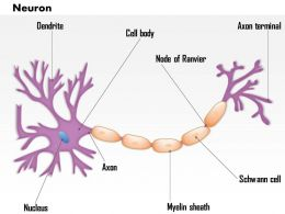 0514 Neuron Nervous System Medical Images For PowerPoint