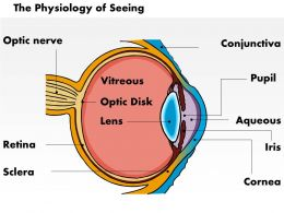 0514 Physiology Of Seeing Eye Anatomy Medical Images For PowerPoint