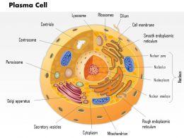 32377459 Style Medical 2 Immune 1 Piece Powerpoint Presentation Diagram Infographic Slide