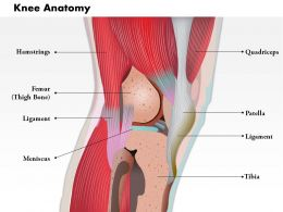 0514 Side View Of Knee Human Anatomy Medical Images For PowerPoint