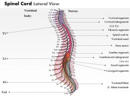 0514 Spinal Cord Lateral View Medical Images For PowerPoint