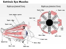 0514 The Extrinsic Eye Muscles Medical Images For PowerPoint