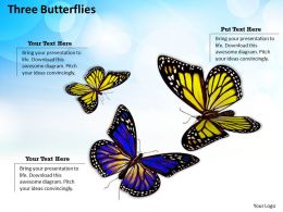 0514 three butterflies Image Graphics for PowerPoint