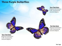 0514 three purple butterflies Image Graphics for PowerPoint