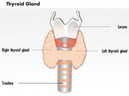 0514 thyroid gland Medical Images For PowerPoint