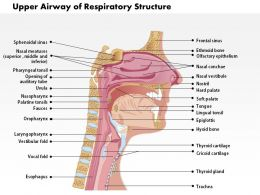 0514 Upper Airway Of Respiratory Structure Medical Images For PowerPoint