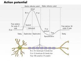 0614 Action Potential Medical Images For PowerPoint