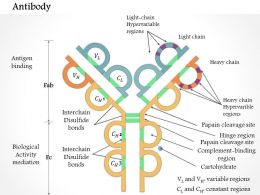 0614 Antibody Medical Images For PowerPoint