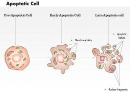 0614 Apoptotic cell Medical Images For PowerPoint