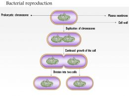 0614 Bacterial Reproduction Medical Images For PowerPoint