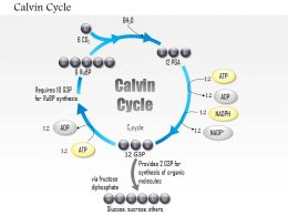 0614 Calvin Cycle Medical Images For PowerPoint