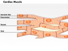 0614 Cardiac Muscle Medical Images For Powerpoint