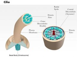 0614 Cilia Medical Images For Powerpoint