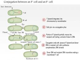 0614 Conjugation Between An F Positive Cell And An F negative Cell Medical Images For Powerpoint