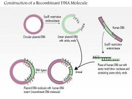 0614 Construction Of A Recombinant DNA Molecule Medical Images For Powerpoint