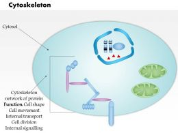 0614 Cytoskeleton biology Medical Images For PowerPoint