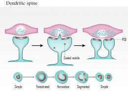 31265011 Style Medical 3 Neuroscience 1 Piece Powerpoint Presentation Diagram Infographic Slide