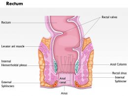 0614 Diagram Of Rectum Medical Images For PowerPoint