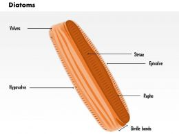 0614 Diatoms biology Medical Images For PowerPoint