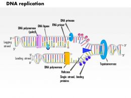 0614 DNA Replication Medical Images For PowerPoint